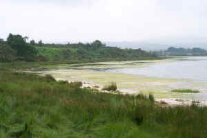 Brands Bay